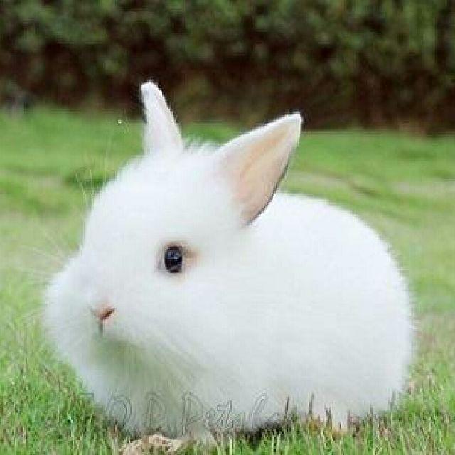 ta con tho lop 3 2 - Top 10 bài văn mẫu tả con thỏ lớp 3 chọn lọc