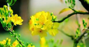 ta loai hoa ma em yeu thich lop 2 2 310x165 - Top 10 bài văn mẫu tả loài hoa mà em yêu thích lớp 2 chọn lọc