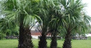 thuyet minh ve cay dưa que em lop 9 2 310x165 - Top 10 bài văn mẫu Thuyết minh về cây dừa quê em lớp 9 chọn lọc
