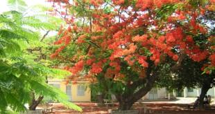 thuyet minh ve cay phuong vi lop 9 2 310x165 - Top 10 bài văn mẫu Thuyết minh về cây phượng vĩ lớp 9 chọn lọc