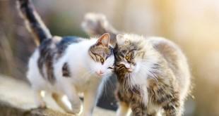 thuyet minh ve con meo lop 9 2 310x165 - Top 10 bài văn mẫu Thuyết minh về con mèo lớp 9 chọn lọc