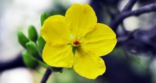 thuyet minh ve cay hoa mai lop 9 2 310x165 - Top 10 bài văn mẫu Thuyết minh về cây hoa mai lớp 9 chọn lọc