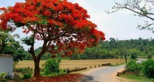 thuyet minh ve loai cay em yeu lop 9 cay bang cay phuong 2 310x165 - Top 10 bài văn mẫu Thuyết minh về loài cây em yêu lớp 9: cây bàng, cây phượng chọn lọc