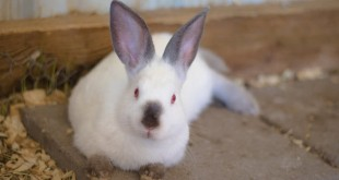 thuyet minh ve con tho lop 9 2 310x165 - Top 10 bài văn mẫu Thuyết minh về con thỏ lớp 9 chọn lọc